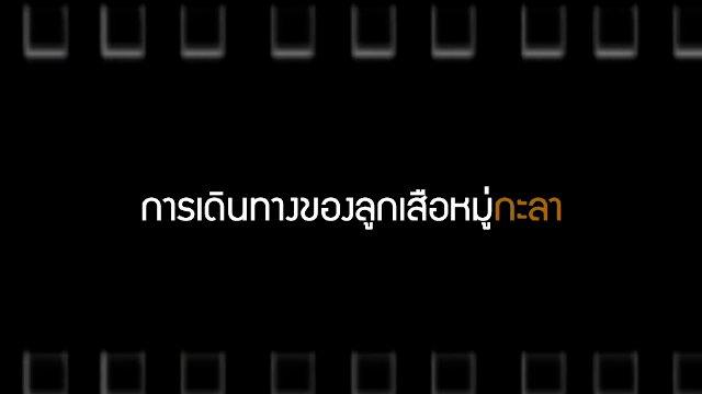 Talk to Films หนังเล่าเรื่อง - การเดินทางของลูกเสือหมู่กะลา