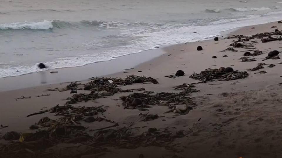 ร้องทุก(ข์) ลงป้ายนี้ - พบขยะทะเลเกยหาดชะอำ ยาวกว่า 5 กิโลเมตร อ.ชะอำ จ.เพชรบุรี