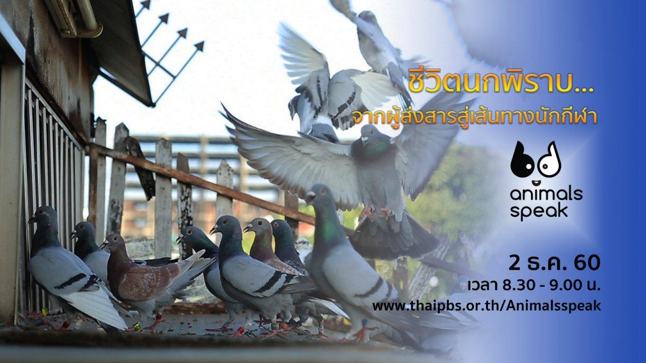 Animals Speak - ชีวิตนกพิราบ...จากผู้ส่งสารสู่เส้นทางนักกีฬา
