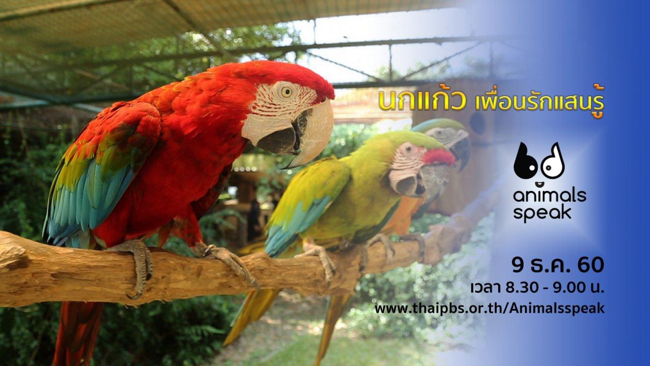 Animals Speak - นกแก้ว เพื่อนรักแสนรู้