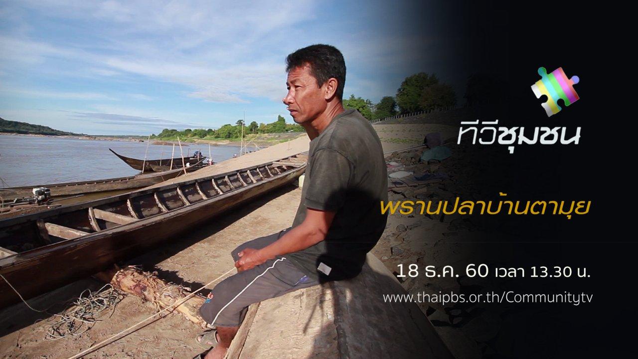 ทีวีชุมชน - พรานปลาบ้านตามุย