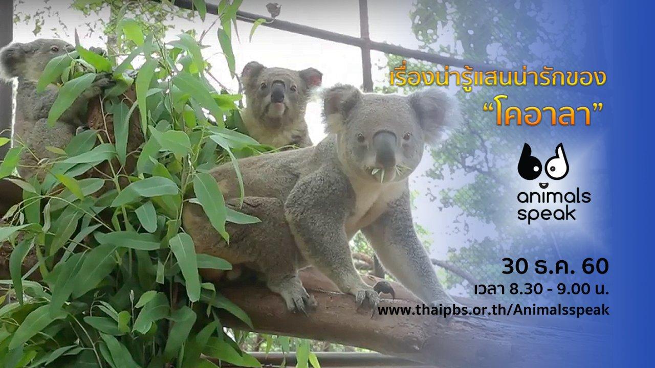 "Animals Speak - เรื่องน่ารู้แสนน่ารักของ ""โคอาลา"""