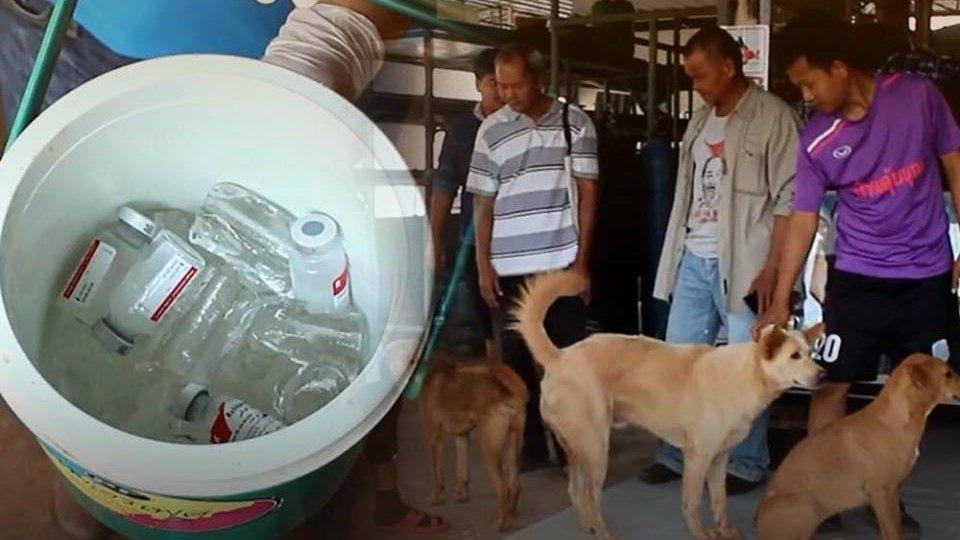 ร้องทุก(ข์) ลงป้ายนี้ - พบเชื้อพิษสุนัขบ้าเพิ่ม 3 อำเภอ ปศุสัตว์สั่งควบคุมโรค 11 อำเภอ จ.นครราชสีมา