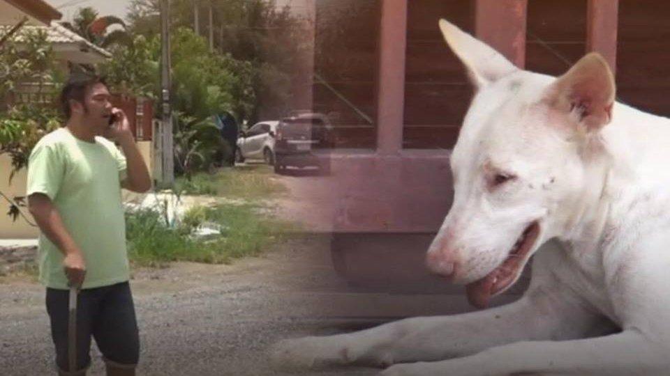 ร้องทุก(ข์) ลงป้ายนี้ - ผวา! พบสุนัขเสี่ยงติดเชื้อไล่กัดสัตว์และคน อ.หัวหิน จ.ประจวบคีรีขันธ์