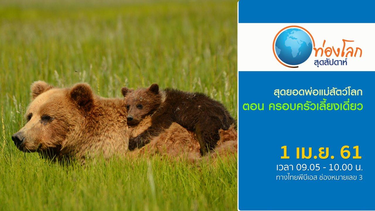 ท่องโลกสุดสัปดาห์ - สุดยอดพ่อแม่สัตว์โลก ตอน ครอบครัวเลี้ยงเดี่ยว