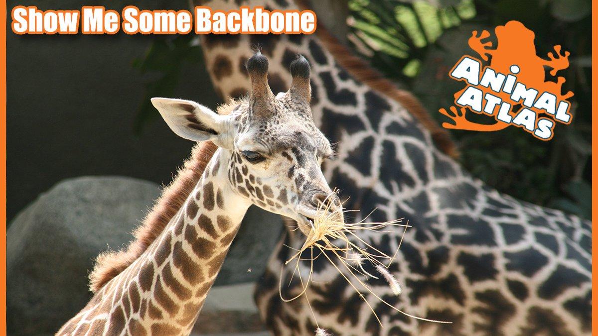 เปิดโลกสัตว์หรรษา - สรรพสัตว์แห่งแอฟริกา