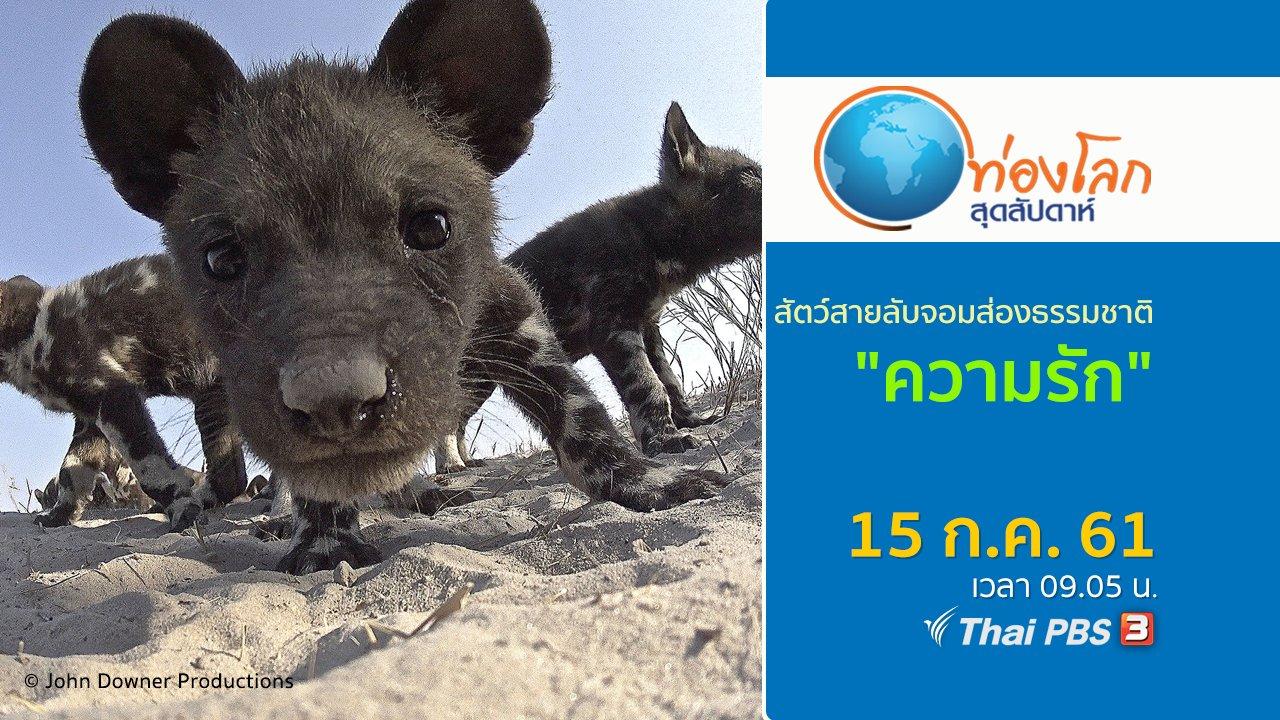 ท่องโลกสุดสัปดาห์ - สัตว์สายลับจอมส่องธรรมชาติ ตอน ความรัก