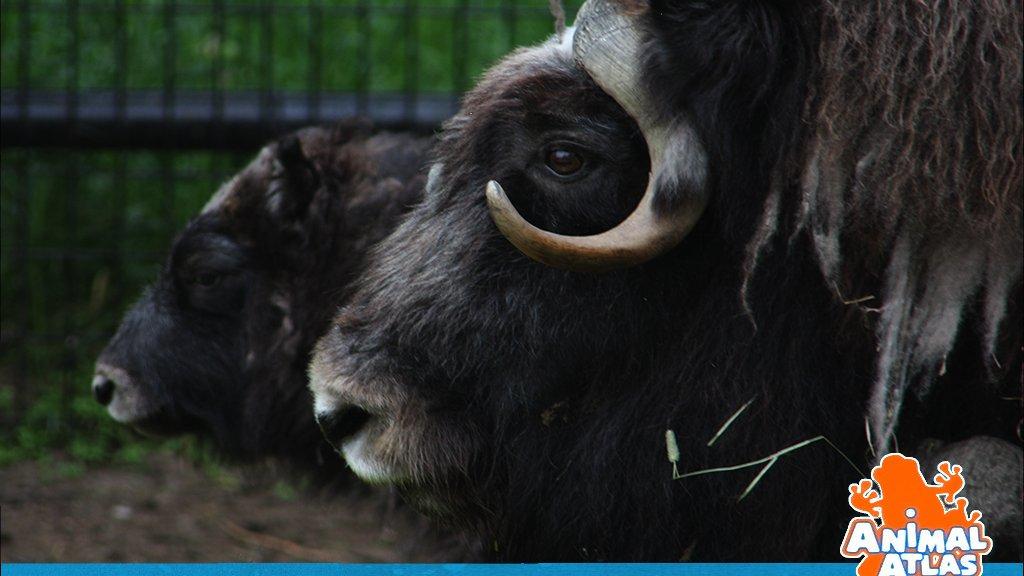เปิดโลกสัตว์หรรษา - สัตว์ในอเมริกาใต้