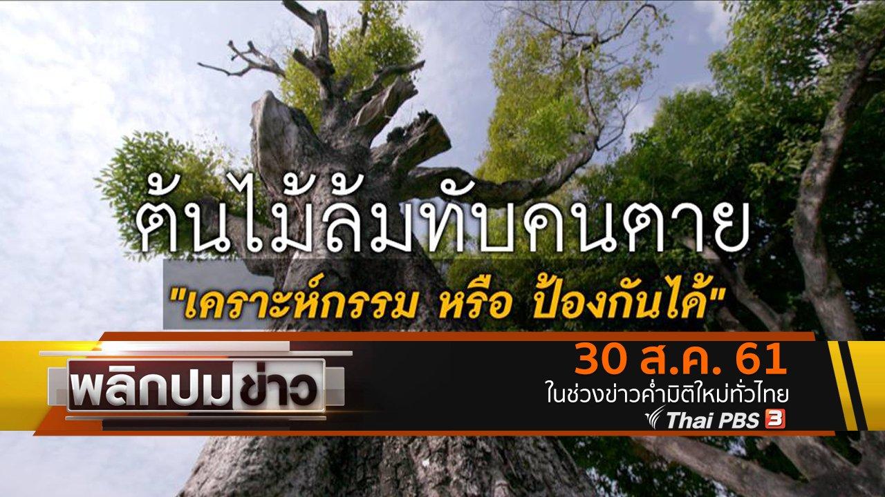 พลิกปมข่าว - ต้นไม้ล้มทับคนตาย เคราะห์กรรมหรือป้องกันได้
