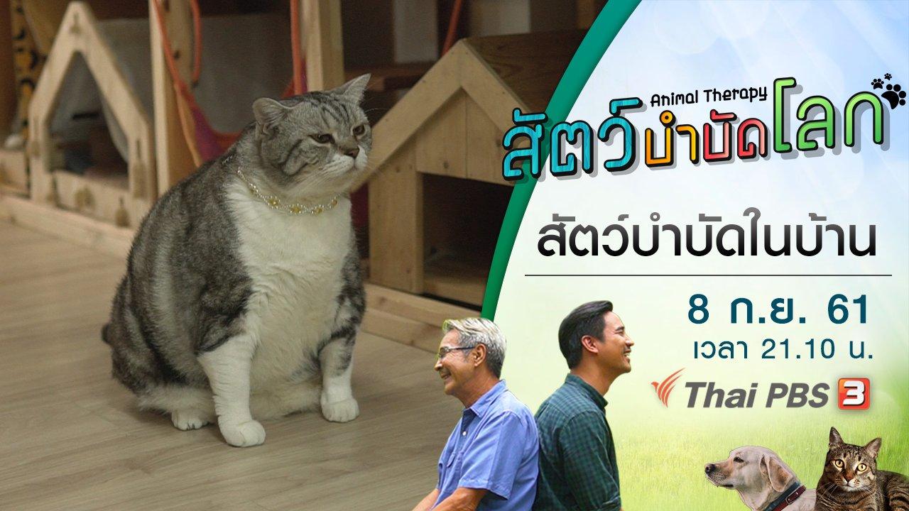 สัตว์บำบัดโลก - สัตว์บำบัดในบ้าน