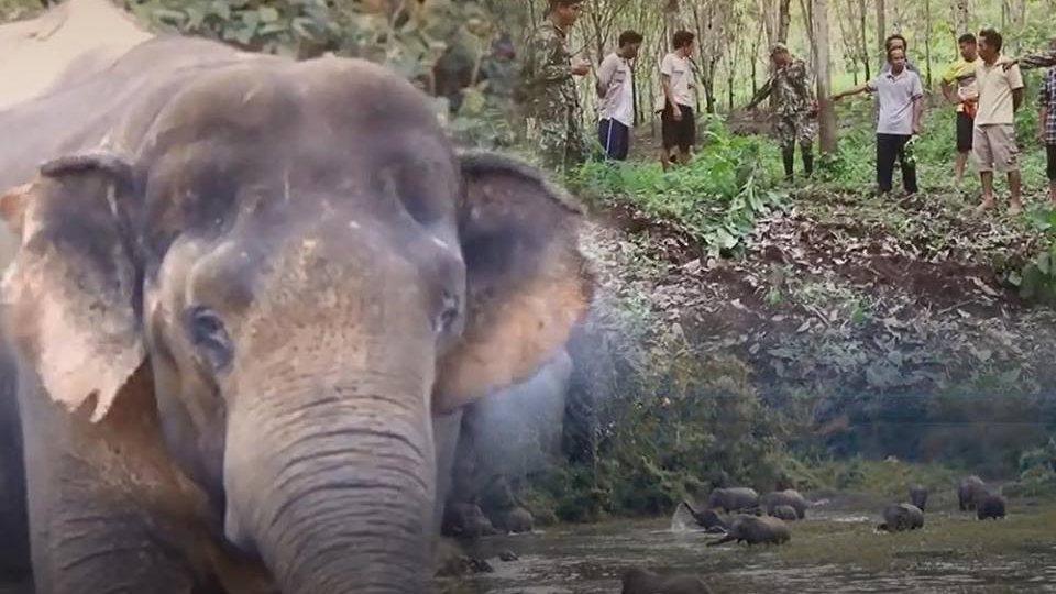 ร้องทุก(ข์) ลงป้ายนี้ - ปัญหาช้างป่าบุกชุมชนทำร้ายชาวบ้านเสียชีวิต อ.ทองผาภูมิ จ.กาญจนบุรี