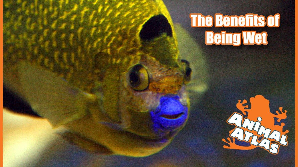 เปิดโลกสัตว์หรรษา - สิ่งมีชีวิตในน้ำ