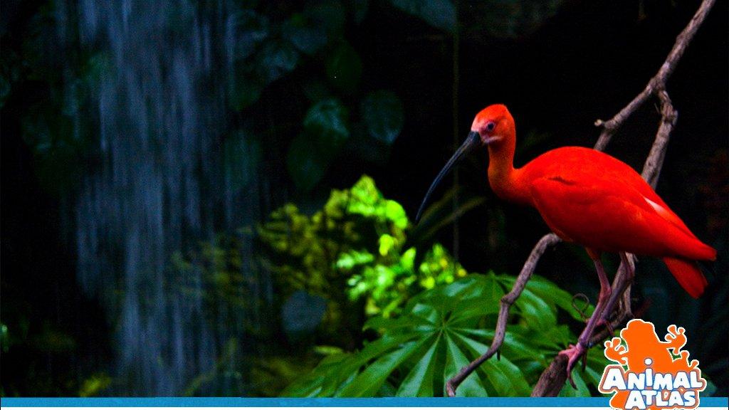 เปิดโลกสัตว์หรรษา - ความหลากหลาย คือ สีสันแห่งชีวิต