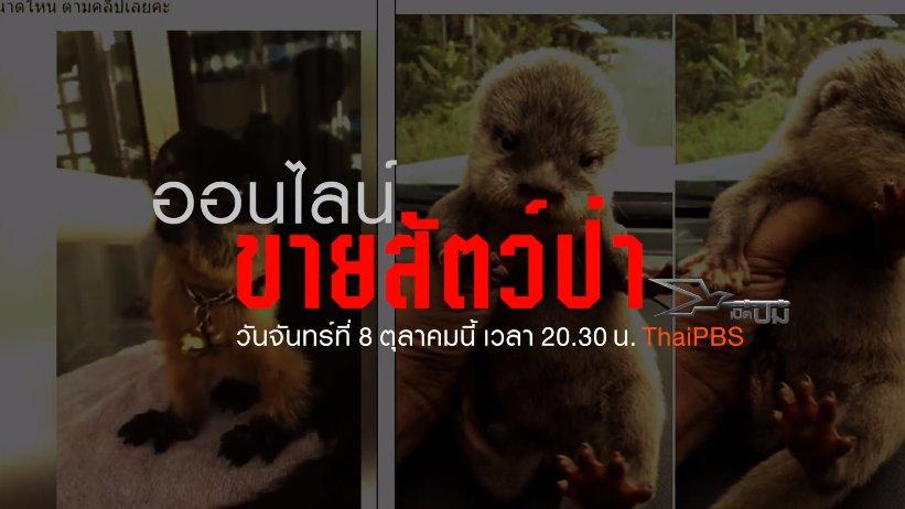 เปิดปม - ออนไลน์ขายสัตว์ป่า