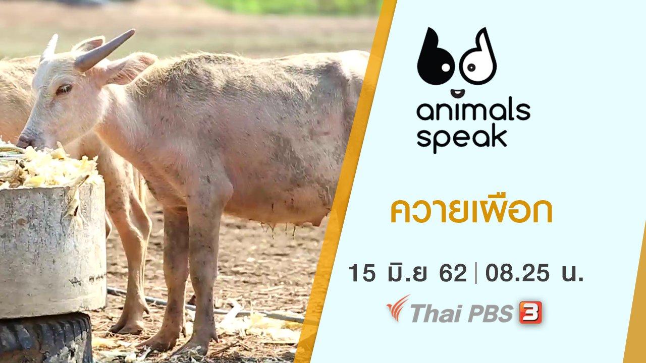 Animals Speak - ควายเผือก