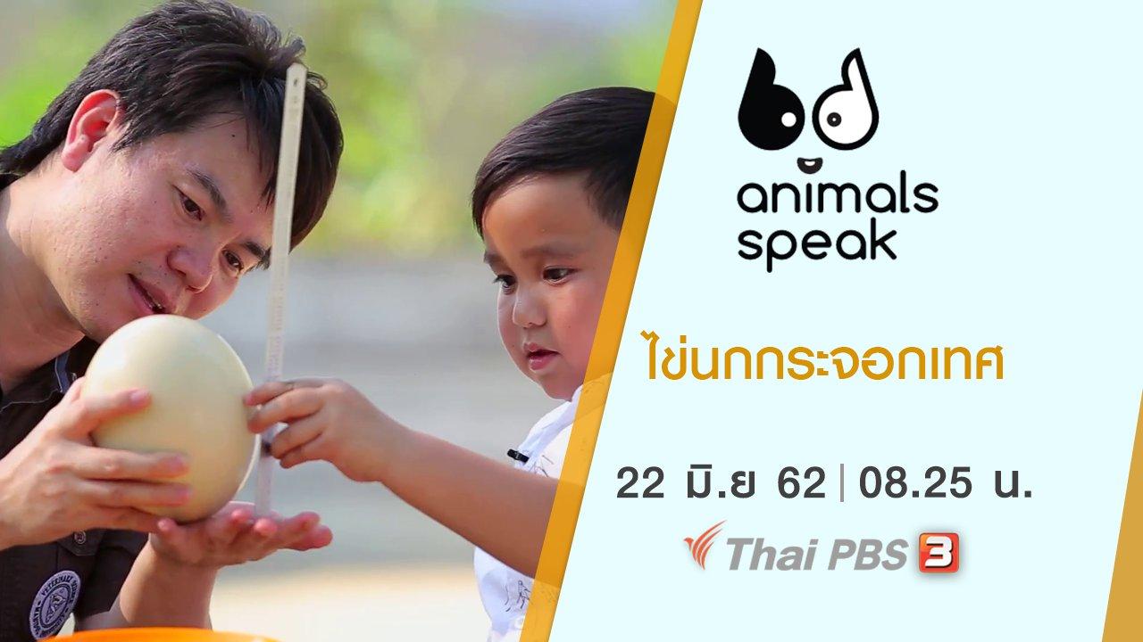 Animals Speak - ไข่นกกระจอกเทศ