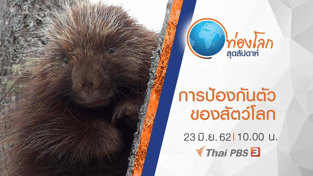 ท่องโลกสุดสัปดาห์ - เปิดโลกสัตว์หรรษา ตอน การป้องกันตัวของสัตว์โลก