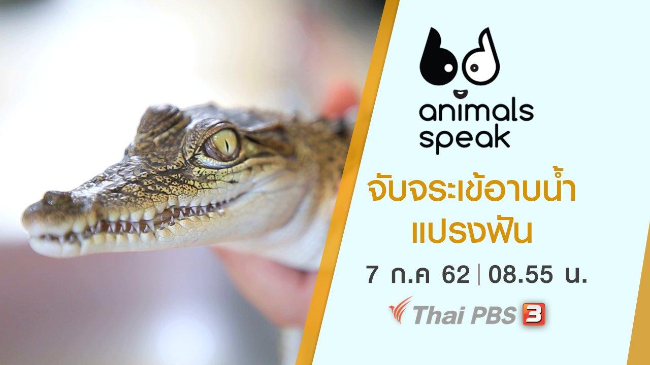 Animals Speak - จับจระเข้อาบน้ำ แปรงฟัน