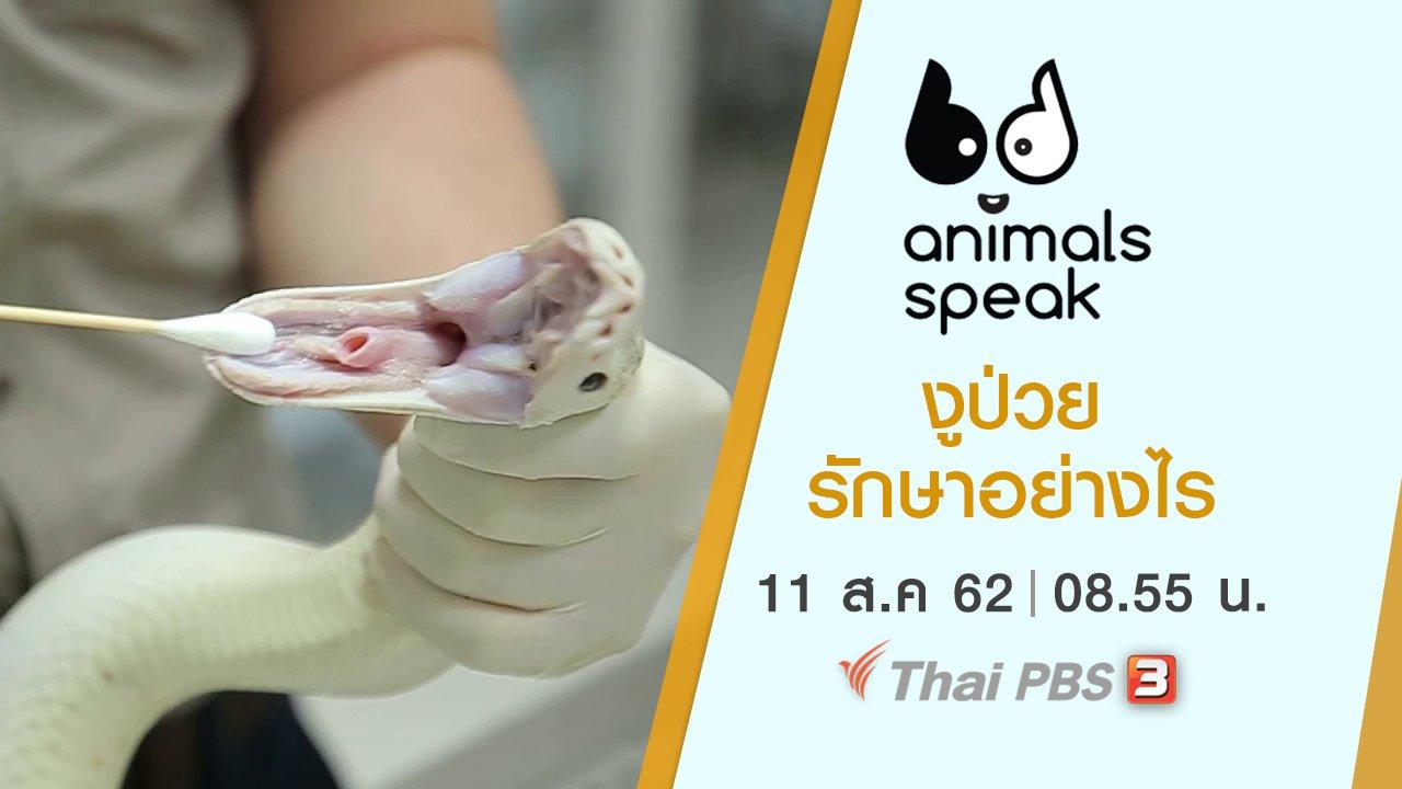 Animals Speak - งูป่วยรักษาอย่างไร
