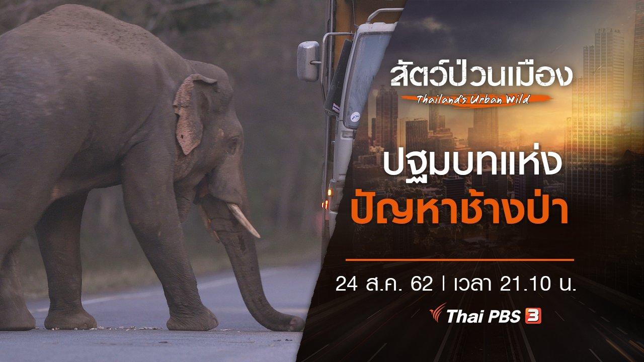 สัตว์ป่วนเมือง - ปฐมบทแห่งปัญหาช้างป่า