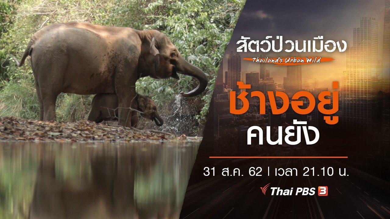 สัตว์ป่วนเมือง - ช้างอยู่คนยัง