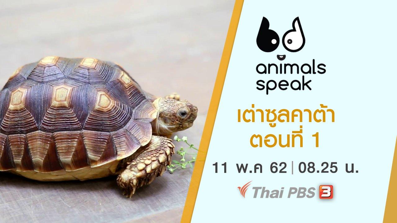 Animals Speak - เต่าซูลคาต้า ตอนที่ 1