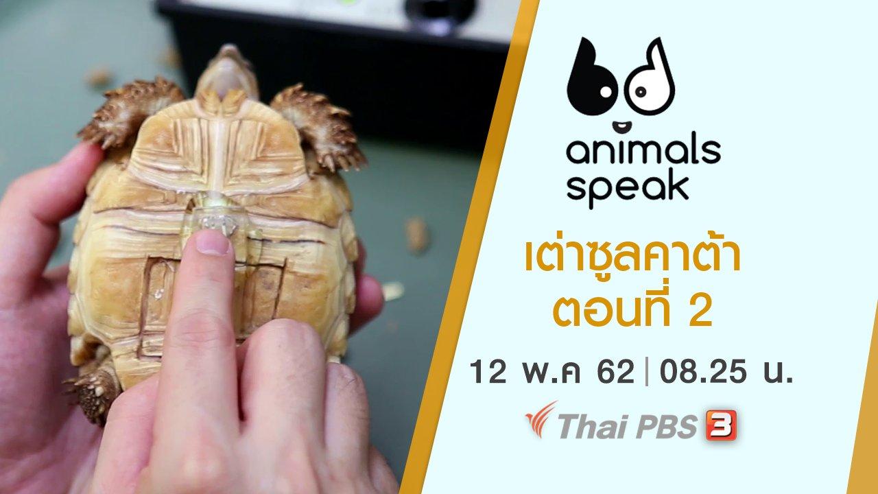 Animals Speak - เต่าซูลคาต้า ตอนที่ 2