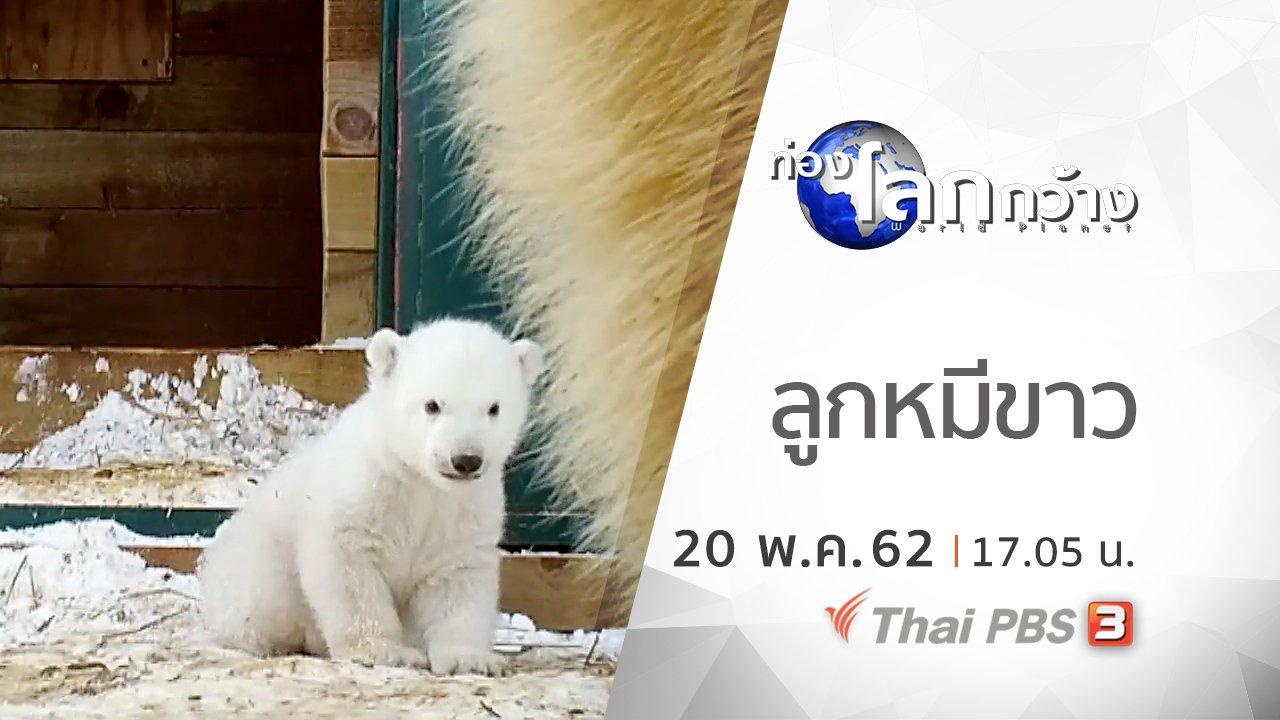 ท่องโลกกว้าง - ลูกหมีขาว