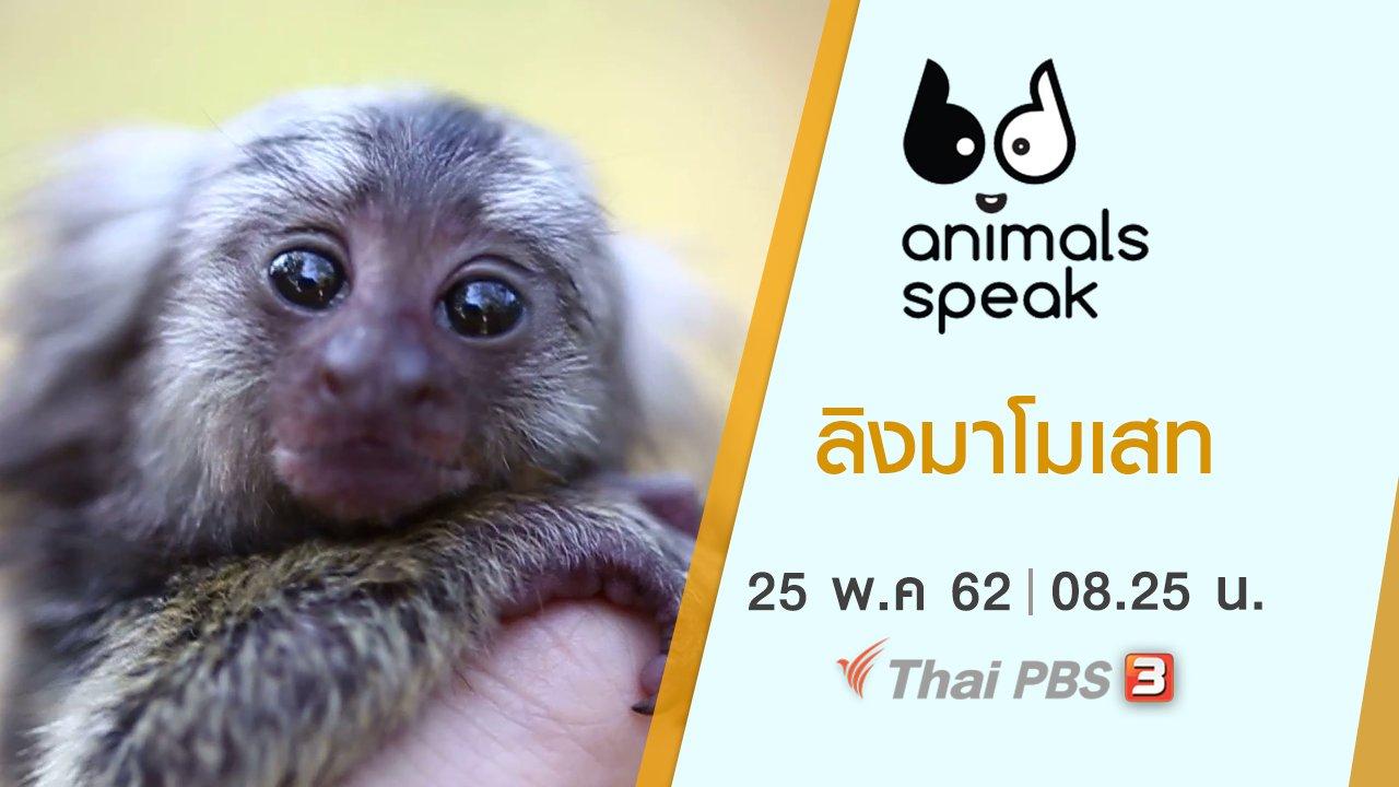 Animals Speak - ลิงมาโมเสท