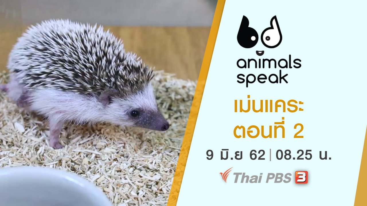 Animals Speak - เม่นแคระ ตอนที่ 2