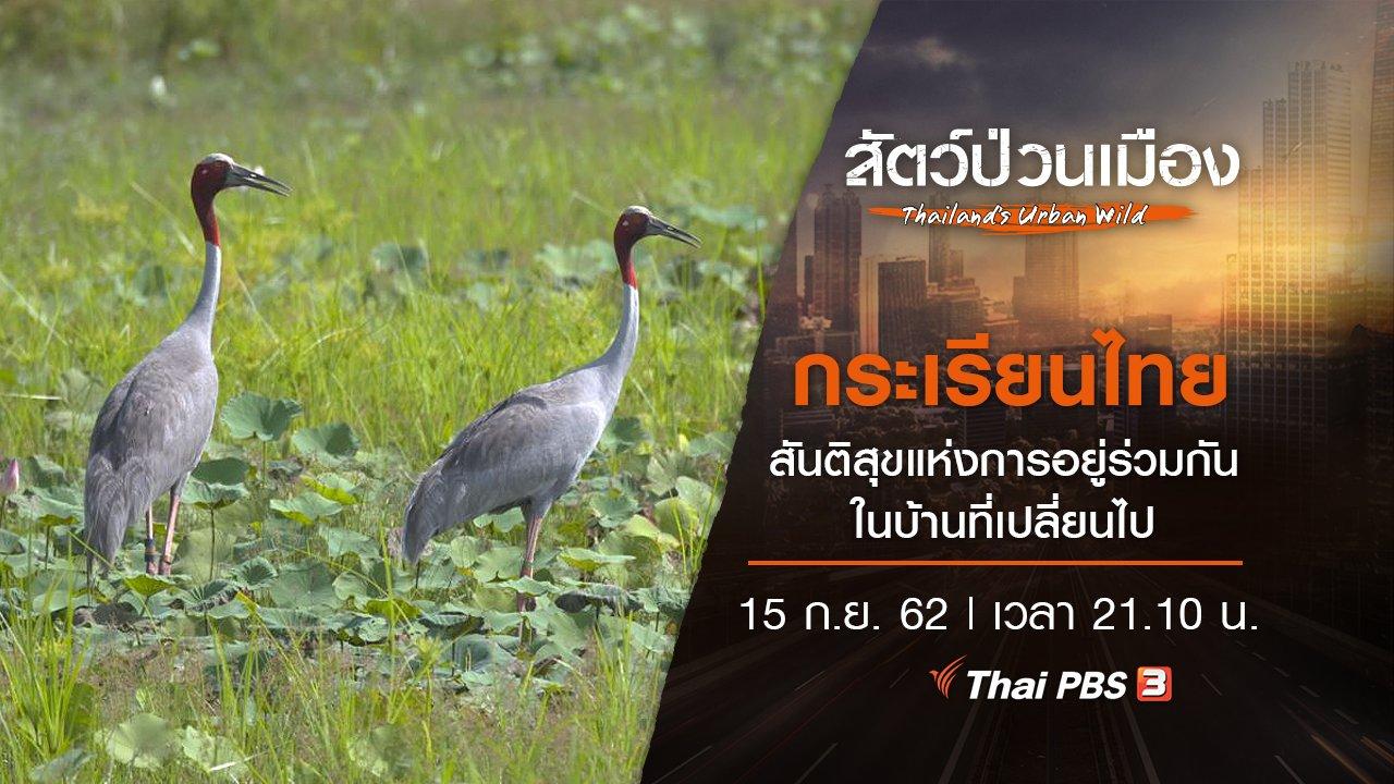 สัตว์ป่วนเมือง - กระเรียนไทย สันติสุขแห่งการอยู่ร่วมกัน ในบ้านที่เปลี่ยนไป