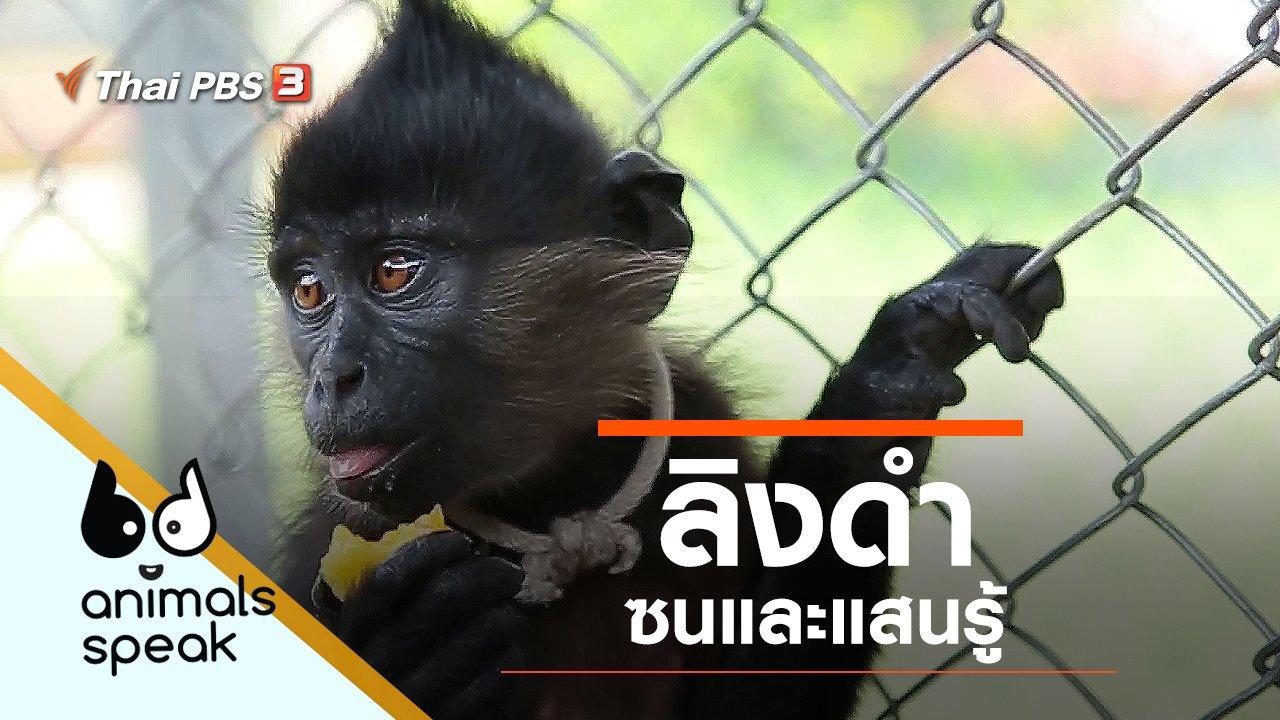 Animals Speak - ลิงดำ ซนและเสนรู้