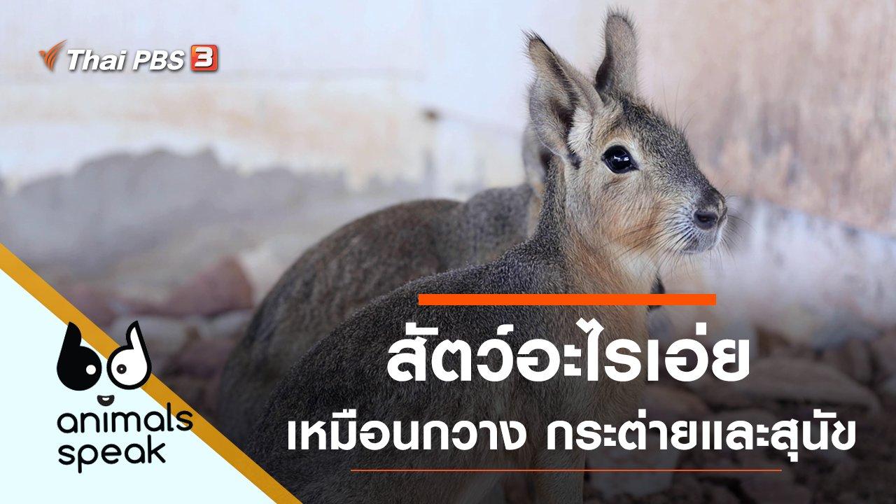 Animals Speak - สัตว์อะไรเอ่ย เหมือนกวาง กระต่ายและสุนัข
