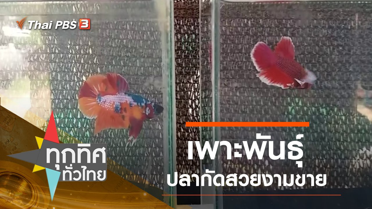 ทุกทิศทั่วไทย - ประเด็นข่าว (12 ก.ย. 62)