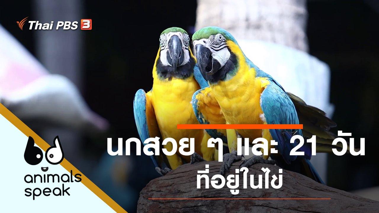 Animals Speak - นกสวย ๆ และ 21 วันที่อยู่ในไข่