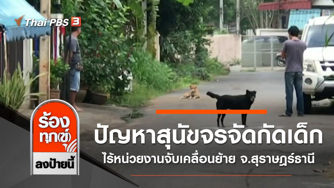 ร้องทุก(ข์) ลงป้ายนี้ - ปัญหาสุนัขจรจัดกัดเด็ก ไร้หน่วยงานจับเคลื่อนย้าย จ.สุราษฎร์ธานี