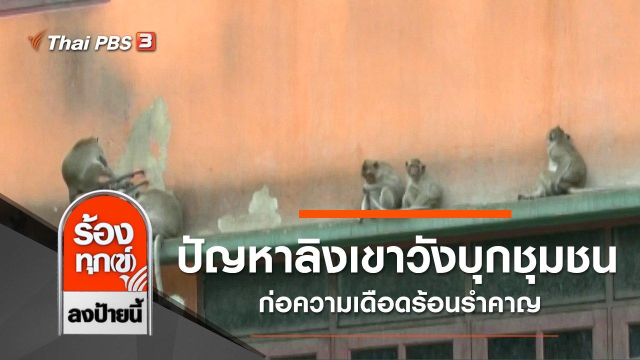ร้องทุก(ข์) ลงป้ายนี้ - ปัญหาลิงเขาวังบุกชุมชน ก่อความเดือดร้อนรำคาญ จ.เพชรบุรี