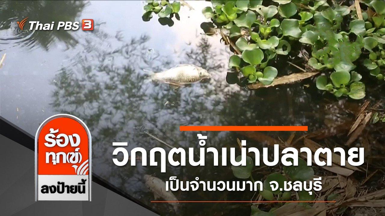 ร้องทุก(ข์) ลงป้ายนี้ - วิกฤตน้ำเน่าปลาตายเป็นจำนวนมาก จ.ชลบุรี