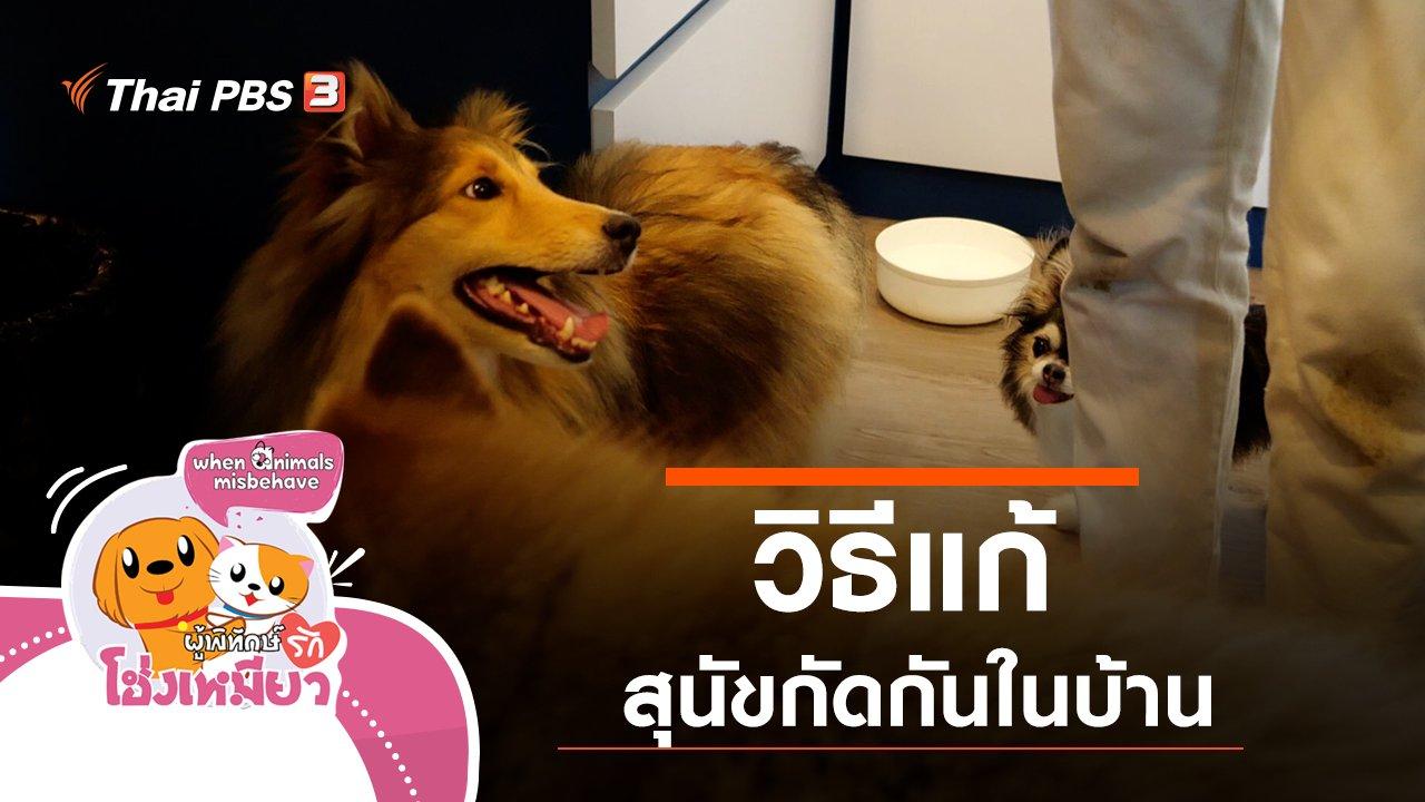 ผู้พิทักษ์รักโฮ่งเหมียว - วิธีแก้สุนัขกัดกันในบ้าน