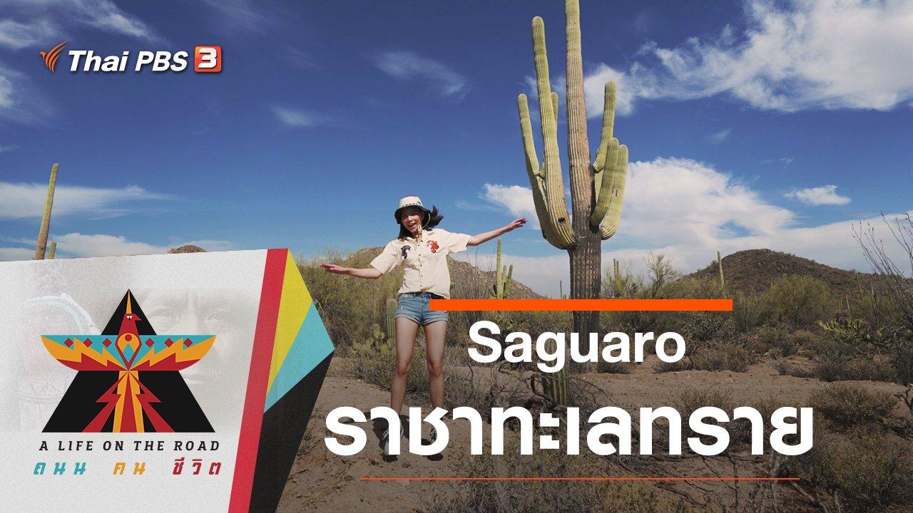 A Life on the Road  ถนน คน ชีวิต - Saguaro : ราชาทะเลทราย