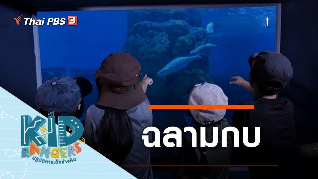 Kid Rangers ปฏิบัติการเด็กช่างคิด - ฉลามกบ