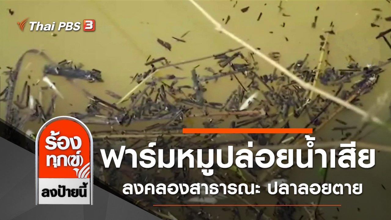 ร้องทุก(ข์) ลงป้ายนี้ - ฟาร์มหมูปล่อยน้ำเสียลงคลองสาธารณะ ปลาลอยตาย จ.พัทลุง