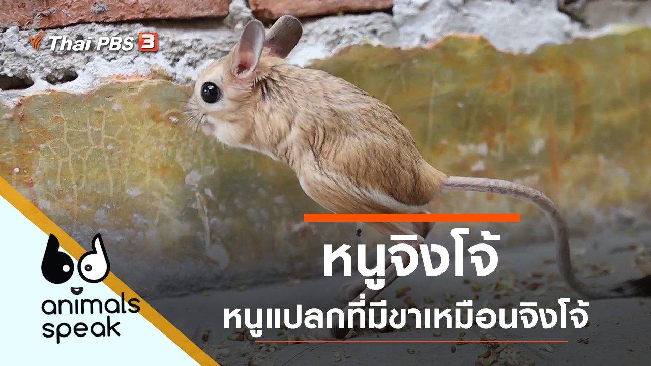 Animals Speak - หนูจิงโจ้ หนูแปลกที่มีขาเหมือนจิงโจ้