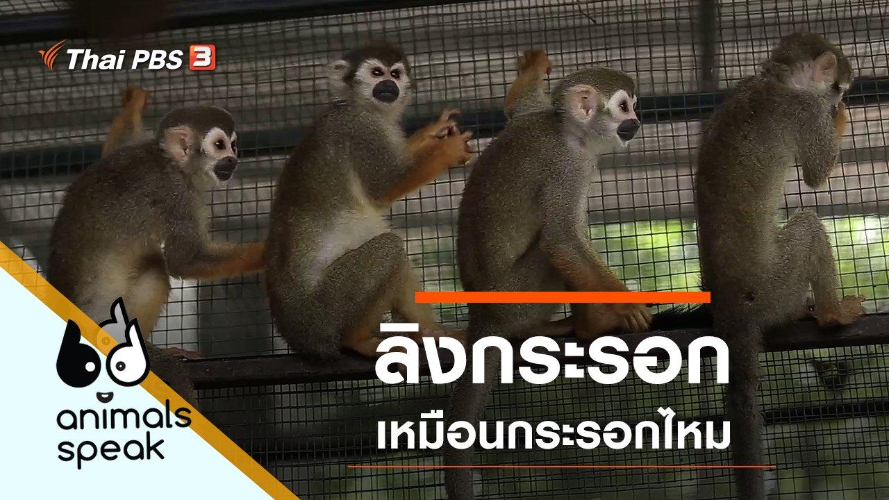 Animals Speak - ลิงกระรอก เหมือนกระรอกไหม