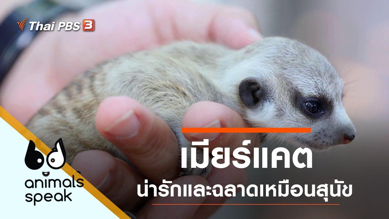 Animals Speak - เมียร์แคต น่ารักและฉลาดเหมือนสุนัข
