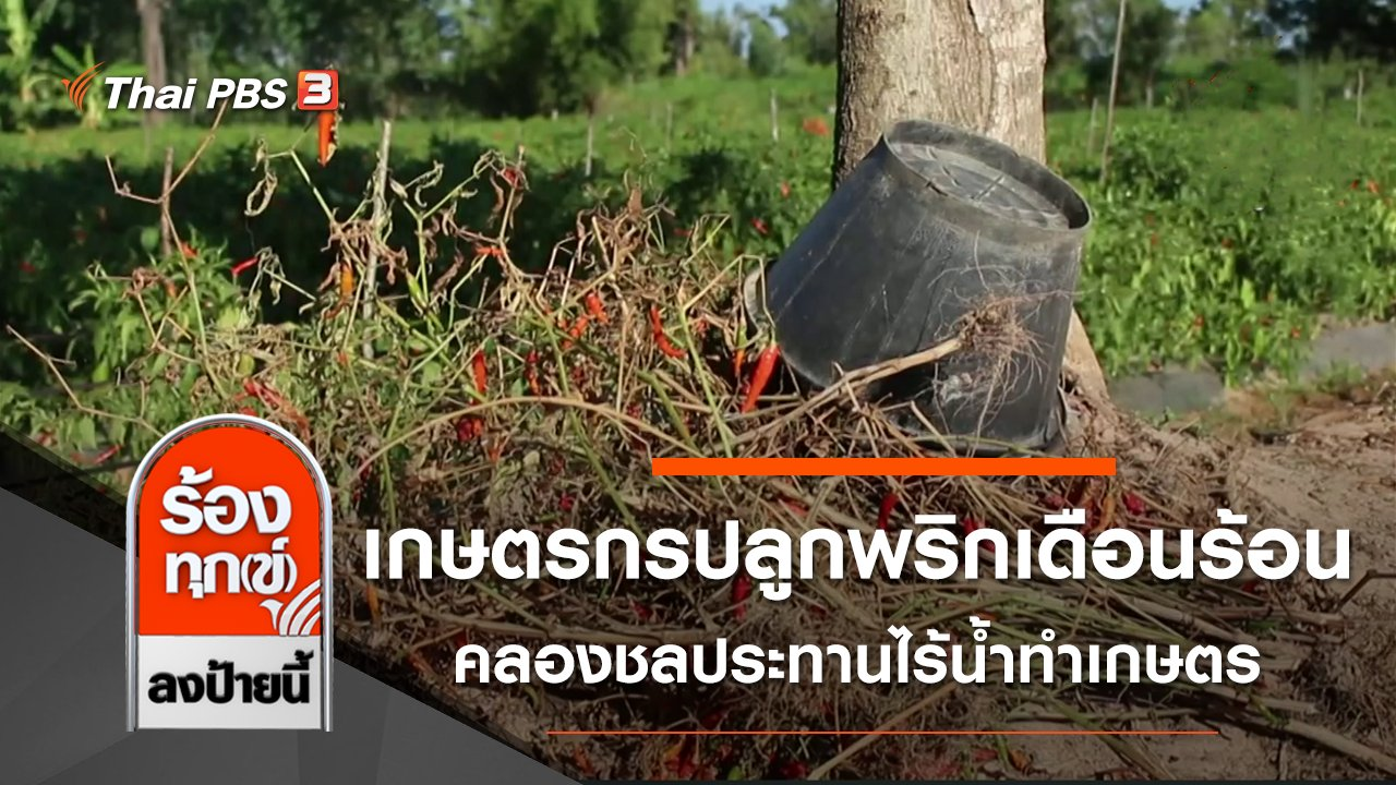 ร้องทุก(ข์) ลงป้ายนี้ - เกษตรกรปลูกพริกเดือดร้อน คลองชลประทานไร้น้ำทำเกษตร