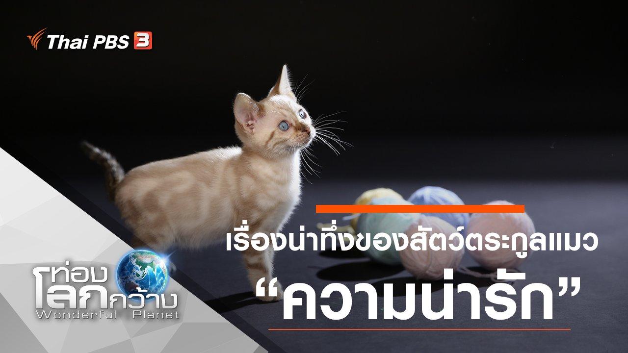 ท่องโลกกว้าง - เรื่องน่าทึ่งของสัตว์ตระกูลแมว ตอน ความน่ารัก