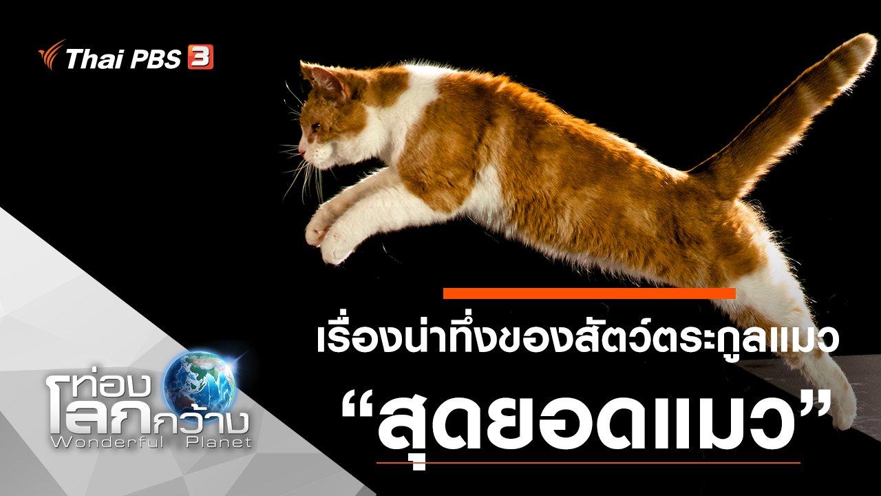 ท่องโลกกว้าง - เรื่องน่าทึ่งของสัตว์ตระกูลแมว ตอน สุดยอดแมว