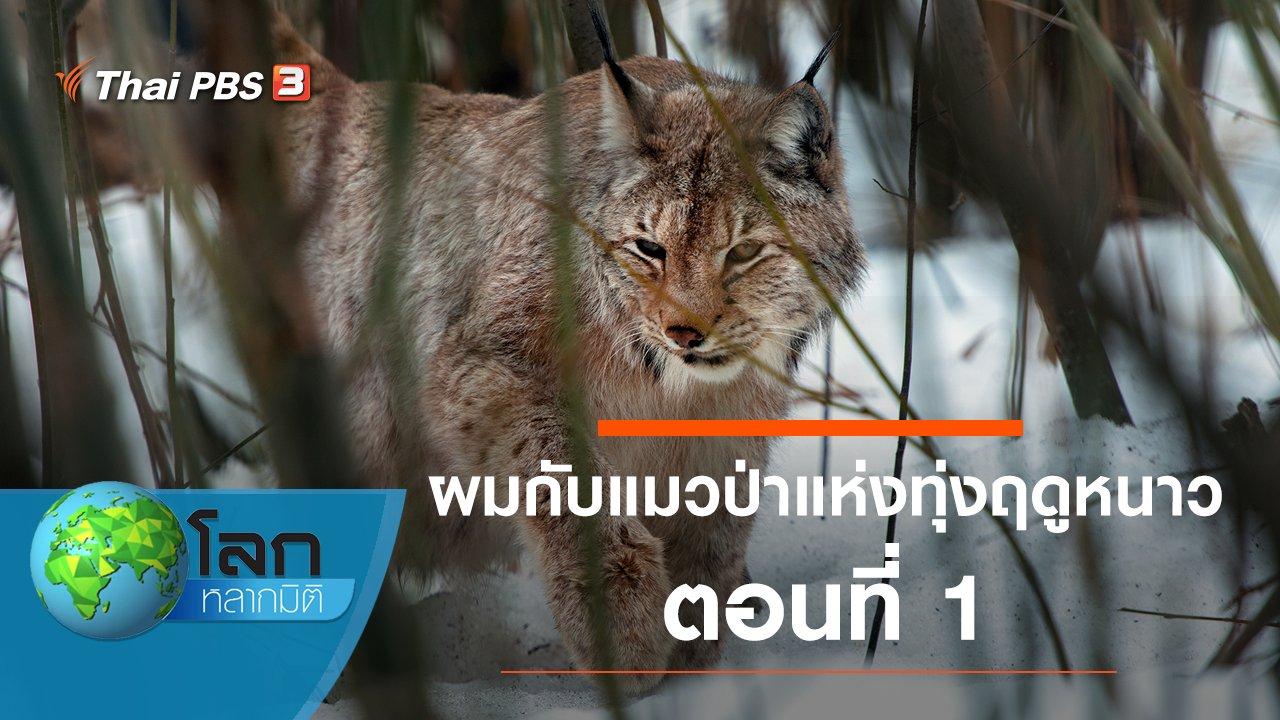 โลกหลากมิติ - ผมกับแมวป่าแห่งทุ่งฤดูหนาว ตอนที่ 1