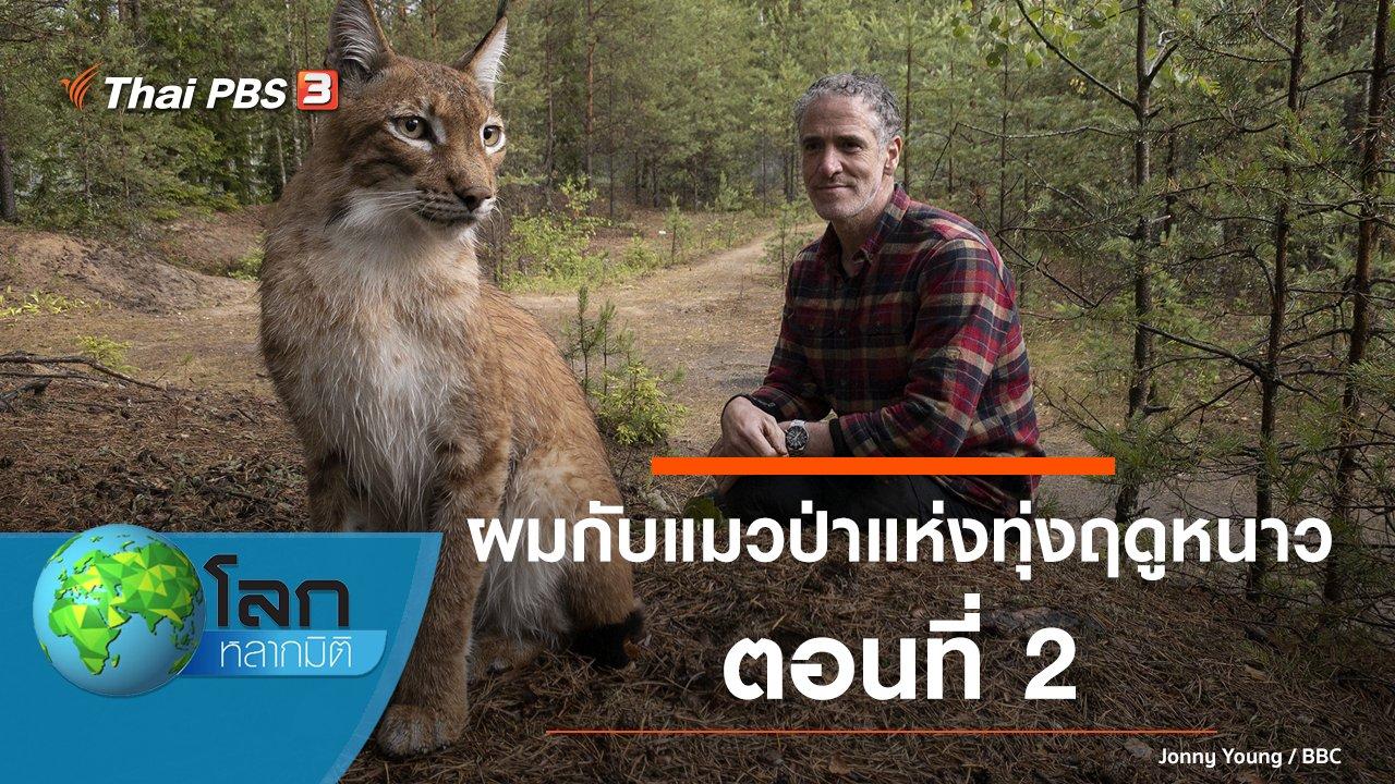 โลกหลากมิติ - ผมกับแมวป่าแห่งทุ่งฤดูหนาว ตอนที่ 2